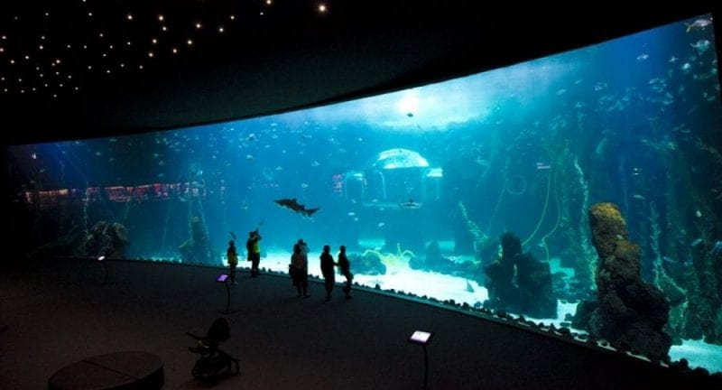 El Poema del Mar tiene la piscina acuario más grande del mundo