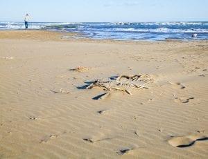 Playa salvaje en el Delta del Ebro