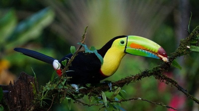 Costa Rica, un destino para amantes de la naturaleza