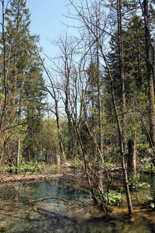 Arboleda en Plitvice