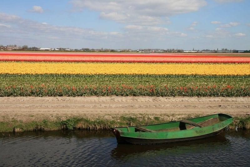 Holanda es un mar de tulipanes