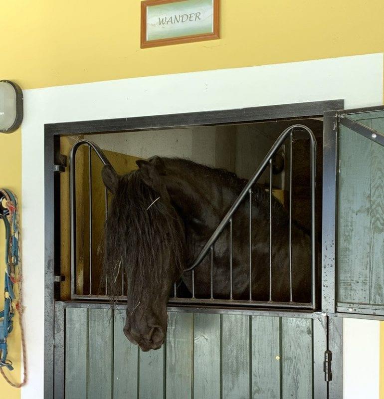 En el Picadero del Rey de Almeida puedes aprender a montar a caballo