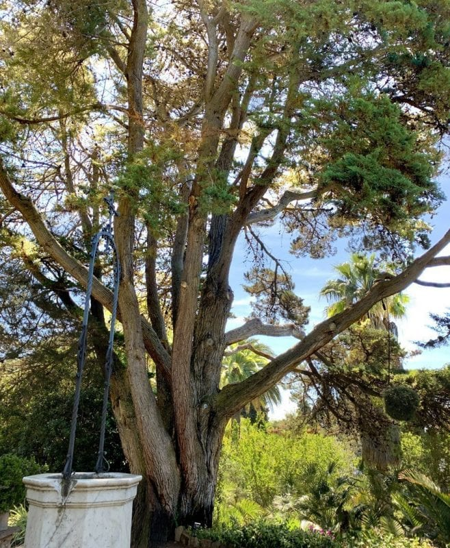 Árboles centenarios en Marimurtra.