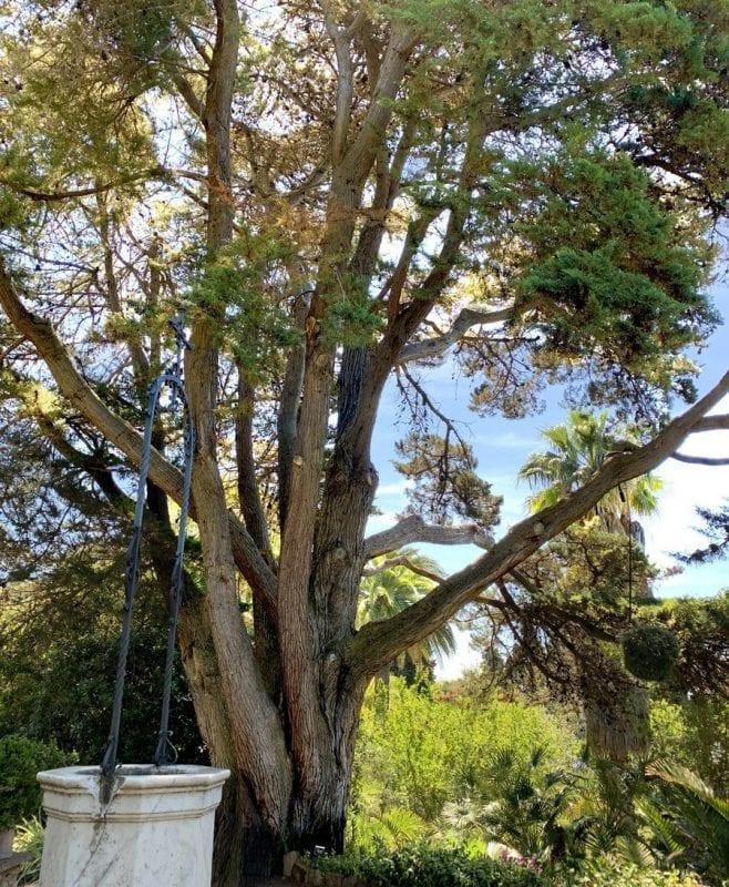 En marimurtra hay árboles centenarios
