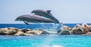Los delfines son la estrella del acuario