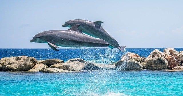 Nadar con delfines es una fantástica experiencia