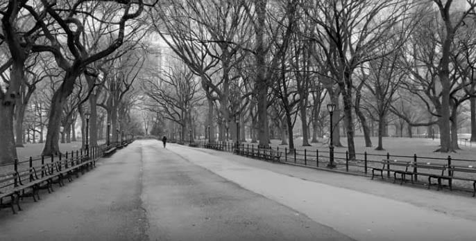 En Central Park los árboles se han quedado solos