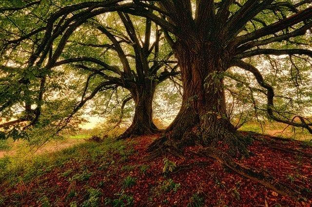 Hay árboles que son obras de arte