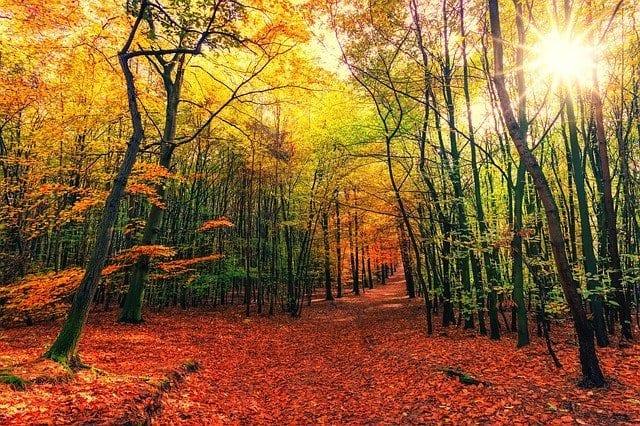 Los colores del otoño son un espectáculo único