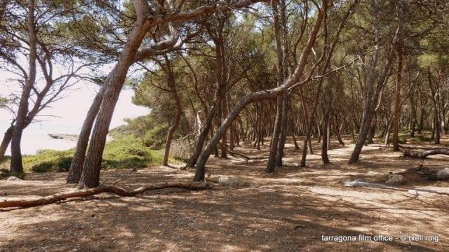 El bosque de la Marquesa