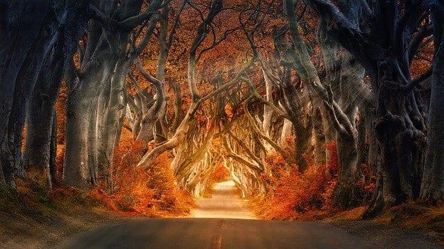 El otoño los bosques multiplican su belleza