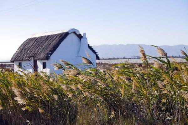 Estampa de arrozales en el Delta.