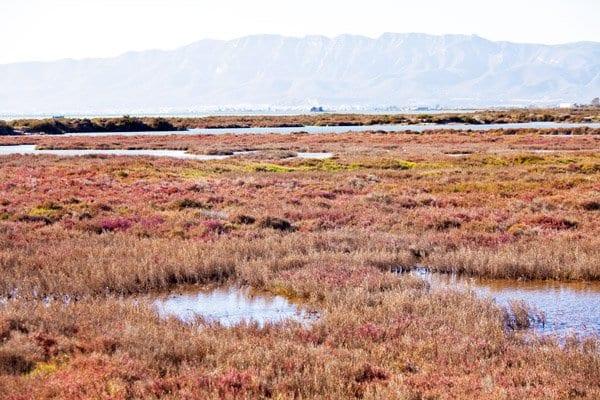Los colores del Delta del Ebro