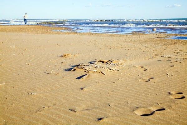 Playas del Delta del Ebro