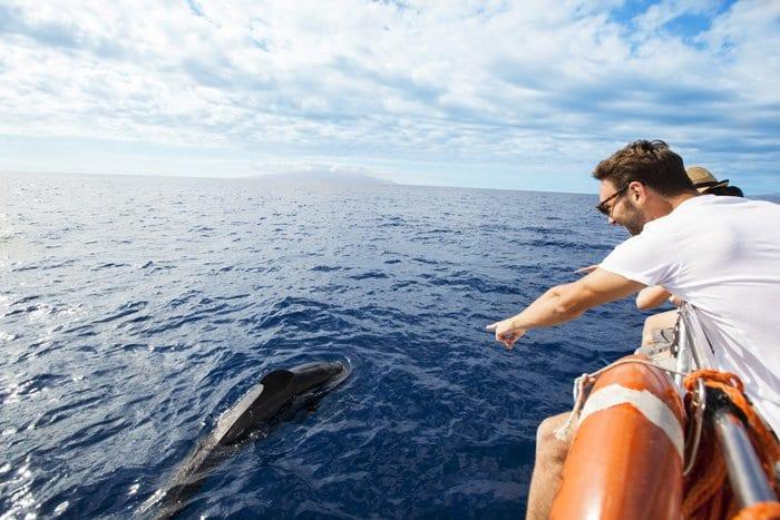 Delfines y ballenas en Tenerife