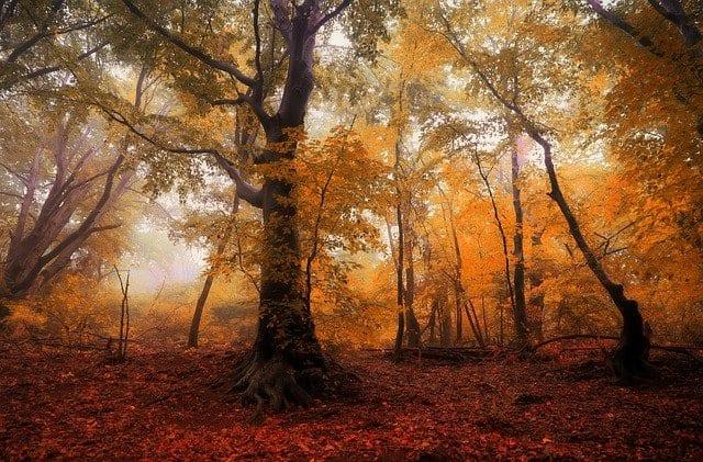 pasear entre bosques es sano y terapéutico