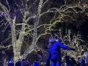árboles iluminados mercadillo navidad ayuntamiento Viena