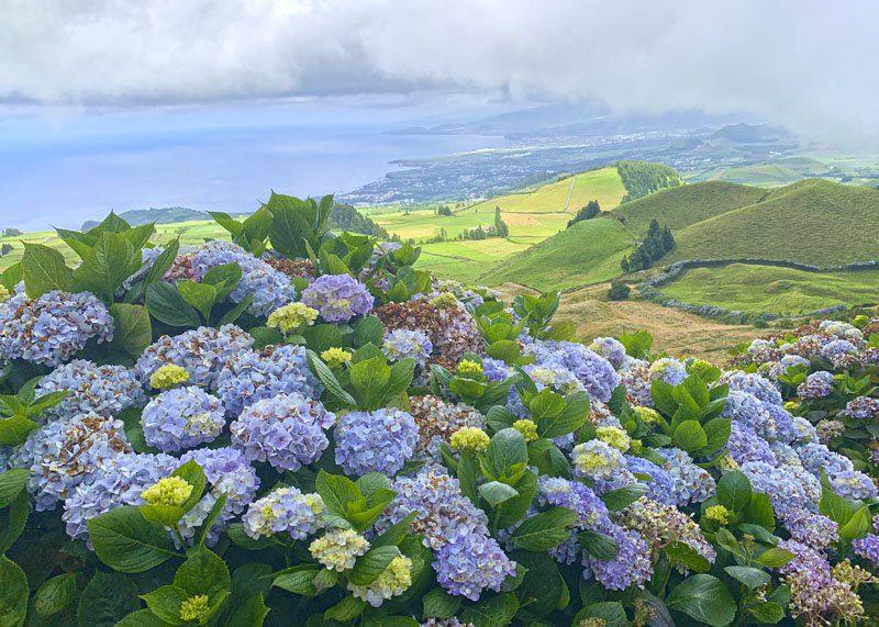 San Miguel de Azores es la isla de las hortensias